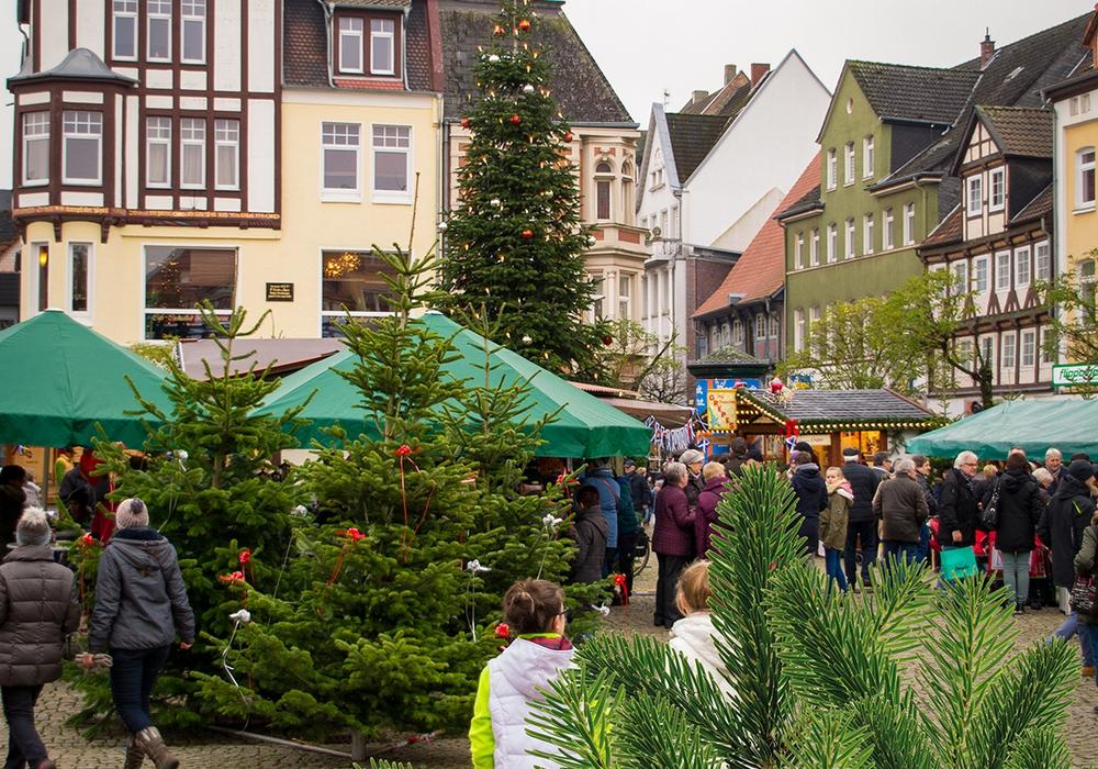 In diesem Jahr schmücken besonders schöne und große Nordmanntannen den Historischen Marktplatz. Foto: Omar Aboud/Peine Marketing GmbH