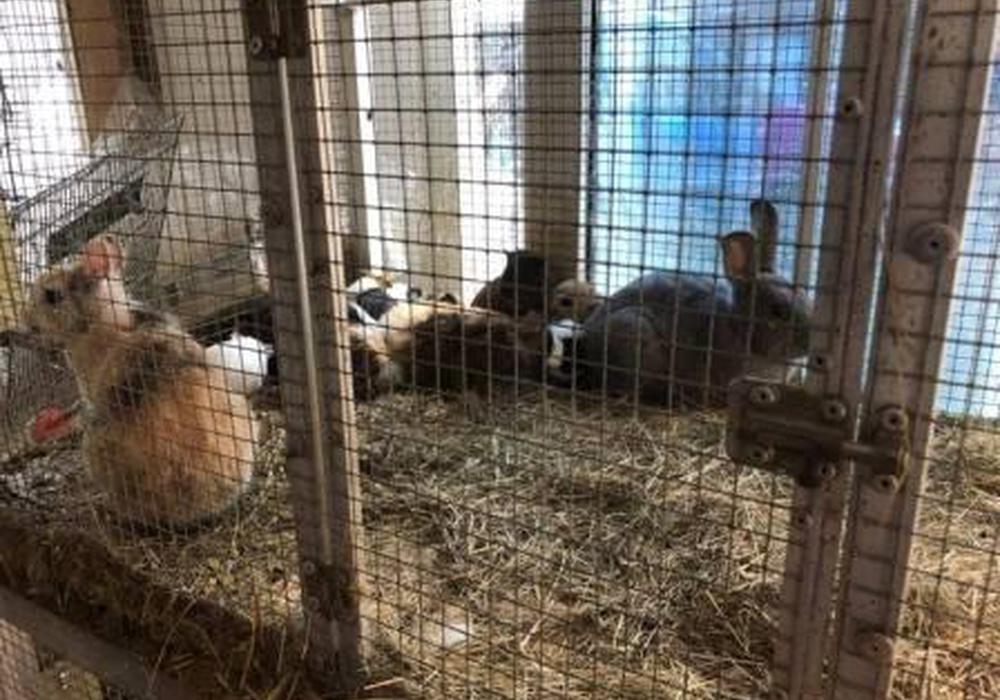 Die Polizei und der Tierschutzverein befreiten rund 400 Tiere. Fotos: Tierschutzverein Gifhorn
