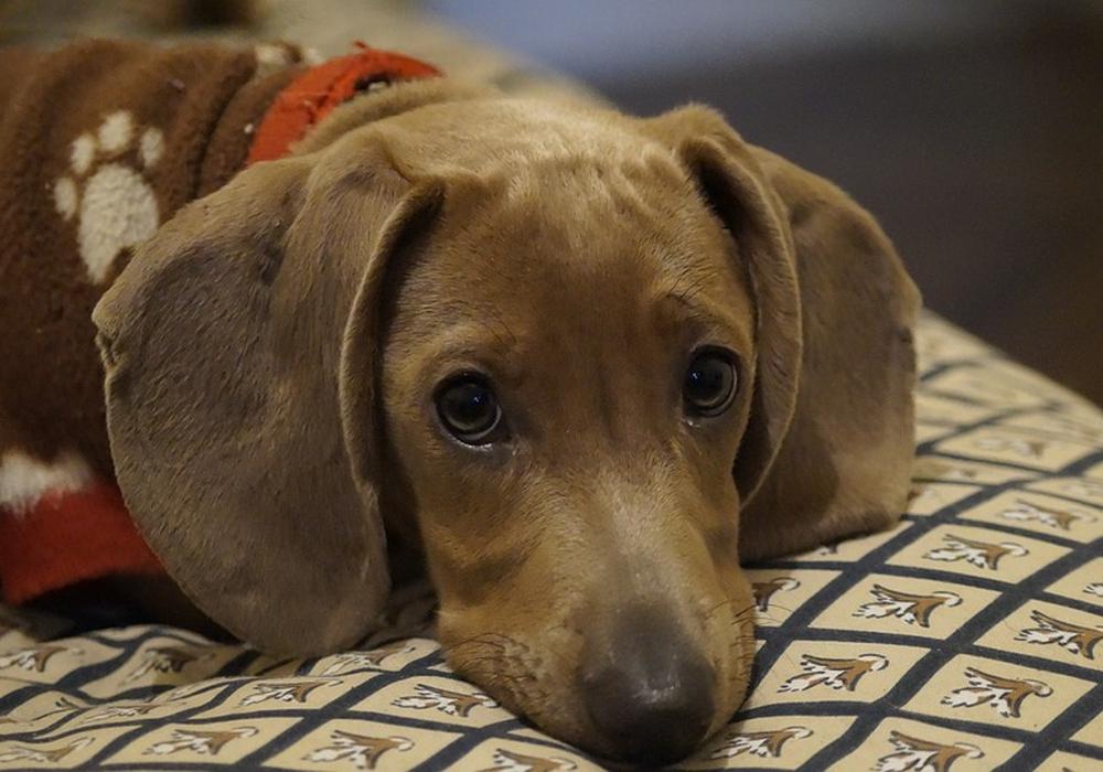 Hundehalter müssen besonders aufpassen, was ihre Hunde am Wegesrand fressen. Symbolbild: pixabay