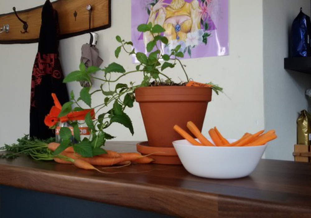 Hauptthema der Projekttage: Karotten. Fotos: THG