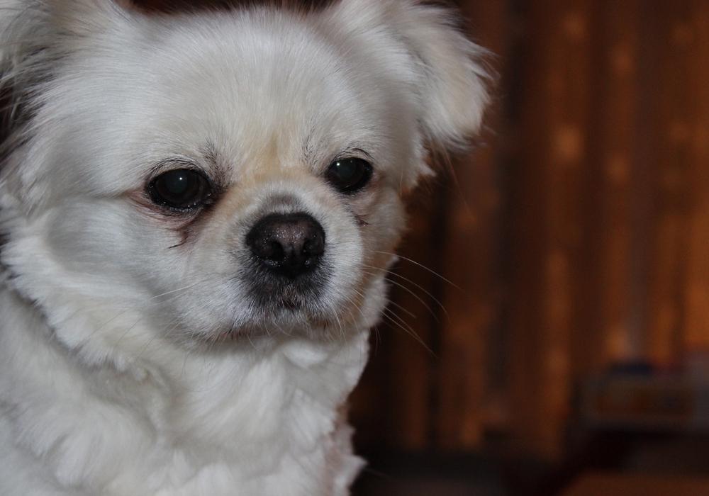 Wie die Tierschutzorganisation TASSO berichtet, konnten 600 vermisste Haustiere wieder gefunden werden.