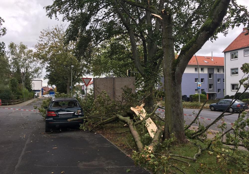 Die Städtischen Betriebe Wolfenbüttel haben damit begonnen, die Schäden des Sturm zu beseitigen. Die Aufräumarbeiten könnten jedoch dauern. Foto: Alexander Dontscheff
