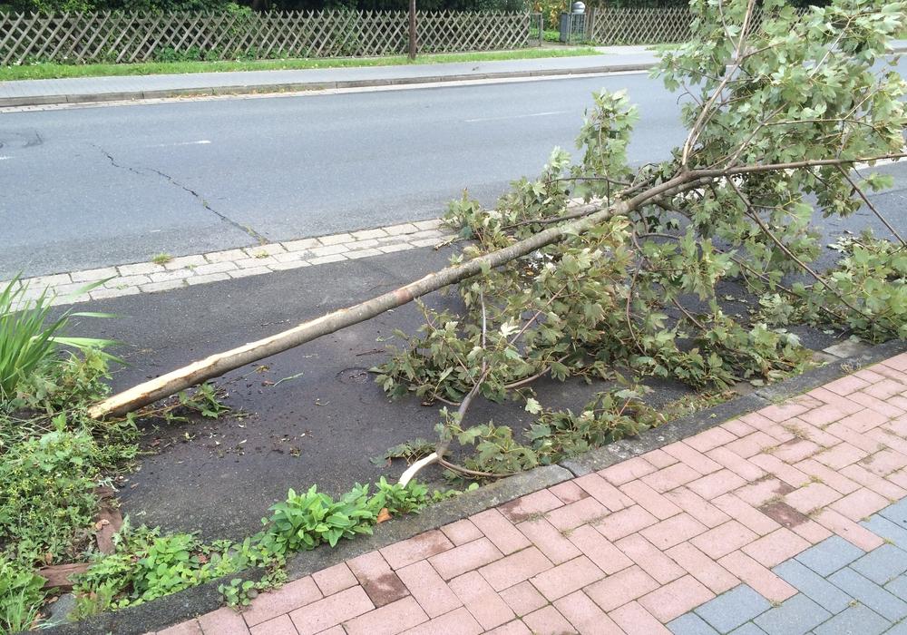 Am Wochenende hatte ein betrunkener Autofahrer mehrere Autos und einen Baum in Schladen beschädigt. Anwohner beklagen nun, dass es nicht selten sei, dass nachts Rennen in Wohngebieten gefahren werden. Foto: Anke Donner