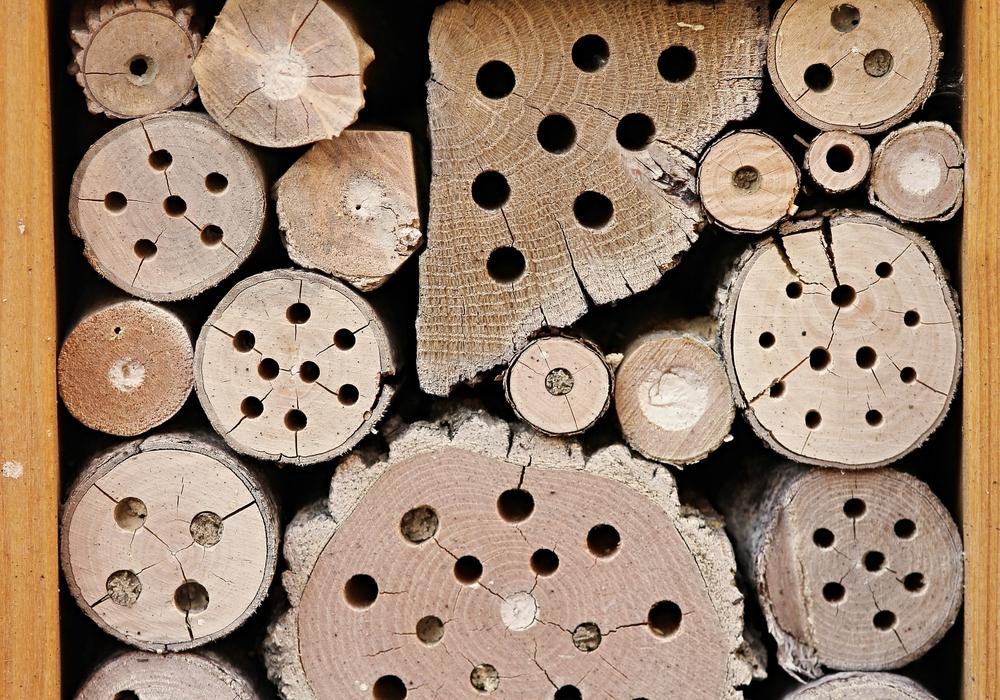 In Volkmarode soll ein Insektenhotel entstehen. Symbolfoto: pixabay