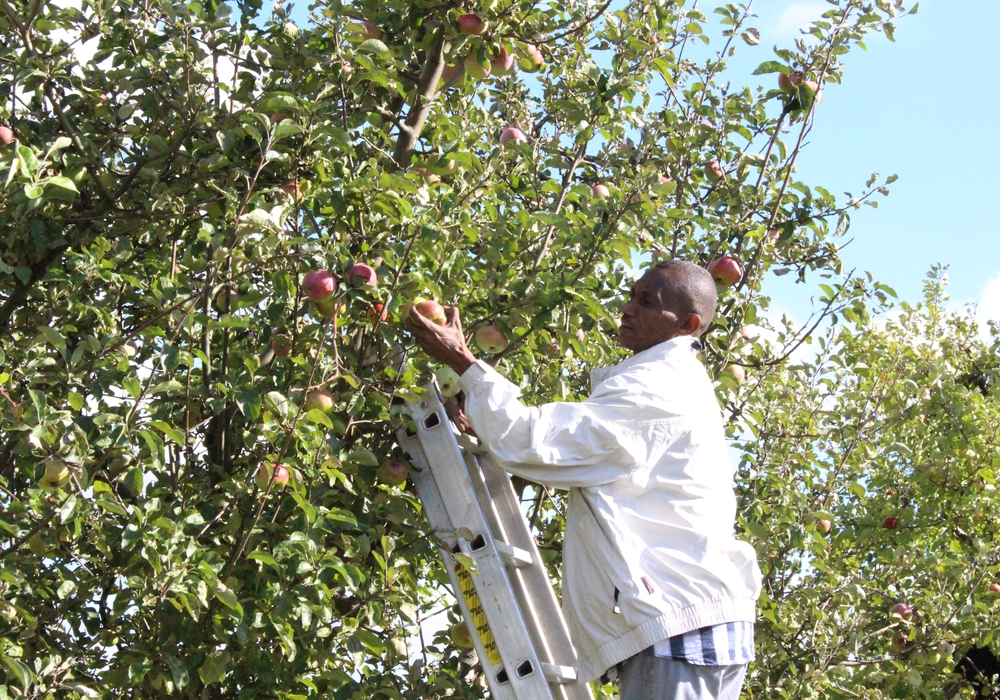 Erst gepflückt, dann gepresst und jetzt wird verkauft. Apfelsaftverkauf für den gute Zweck in Hemkenrode. Foto: Archiv