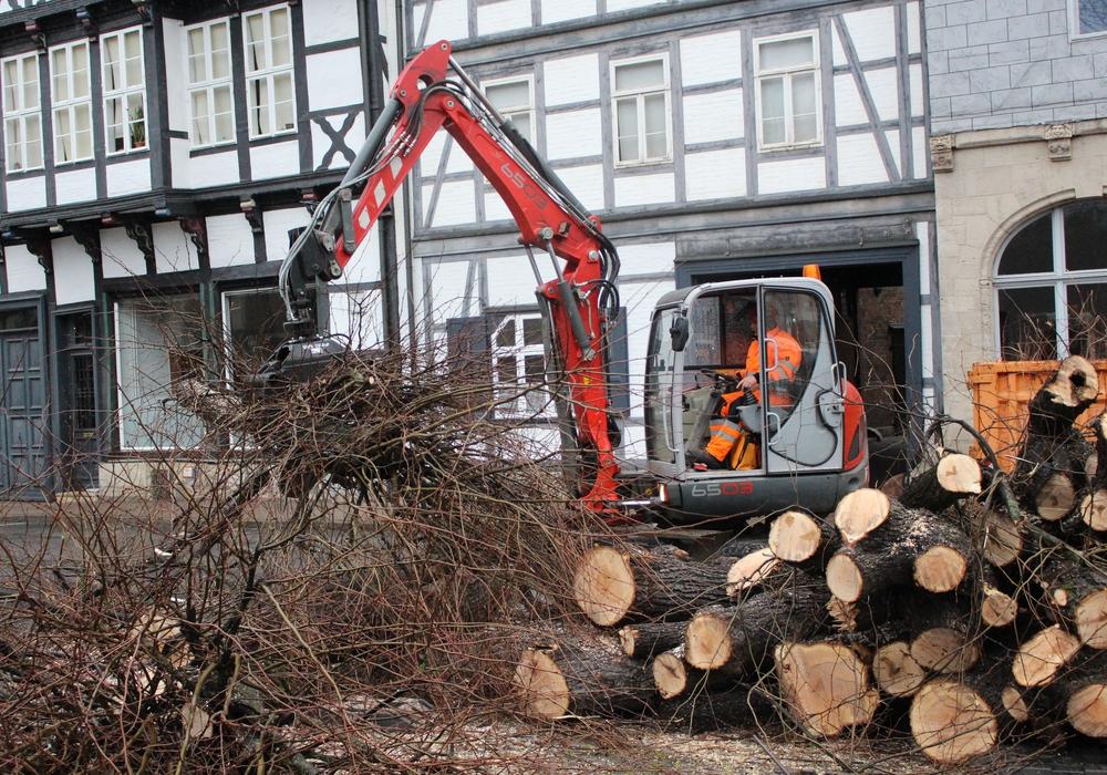 In der Reichsstraße wurden Bäume gefällt. Foto: Max Förster