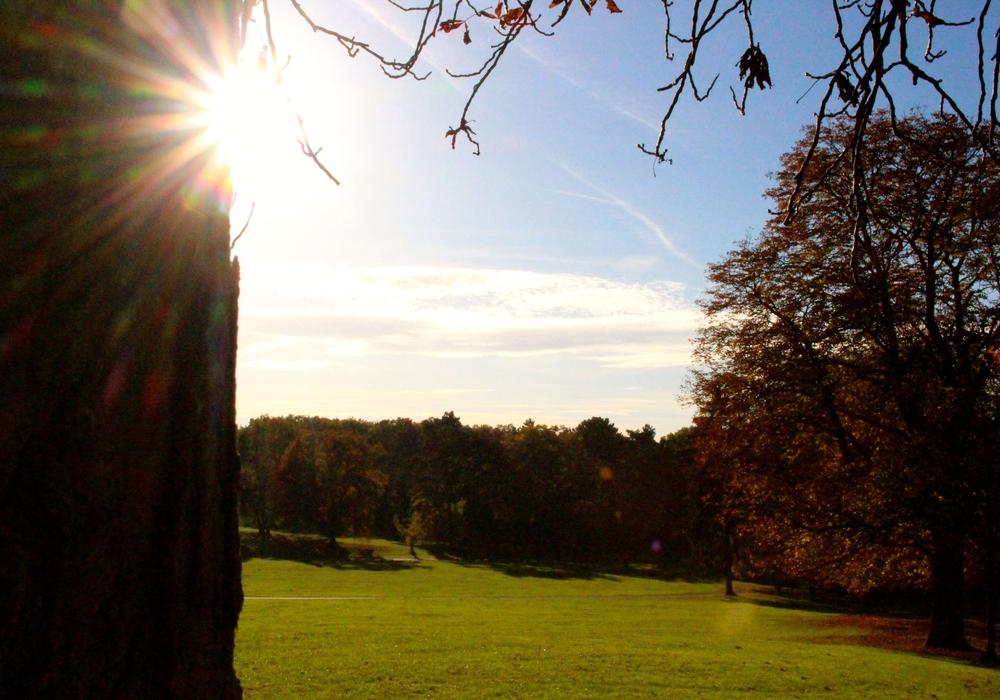 Die Stadt Braunschweig will  in die sportliche Aufwertung im Prinzenpark und am Franzschen Feld investieren. Foto: Anke Donner
