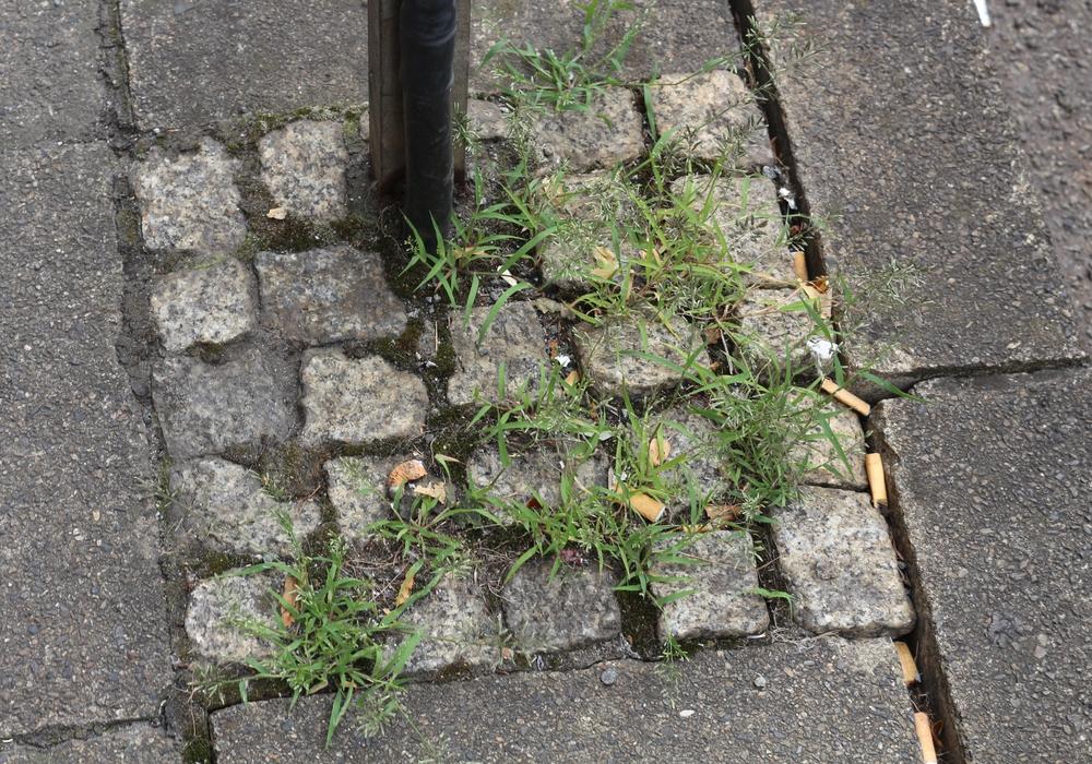 Die Linksfraktion im Stadtrat hat einen Antrag eingebracht, der den Unkrautvernichter Glyphosat von den städtischen Grünflächen verbannen soll. Symbolfoto: Robert Braumann