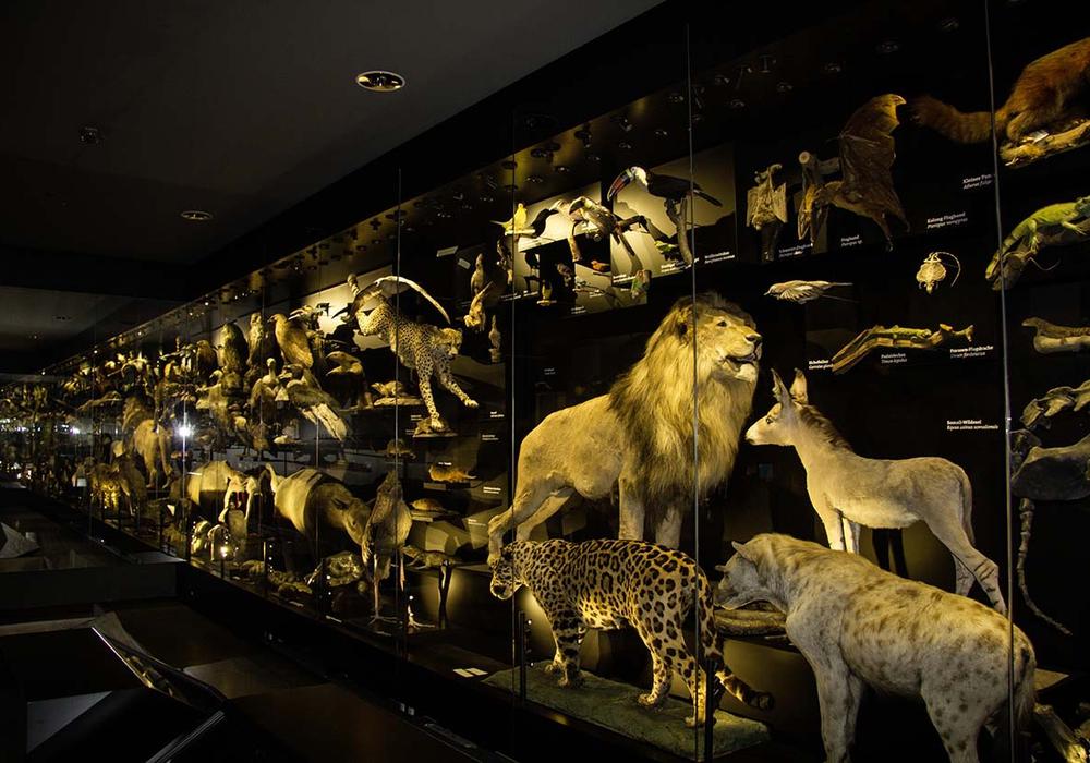 Blick ins Schaumagazin des Naturhistorischen Museums. Foto: M. Neppe, SNHM