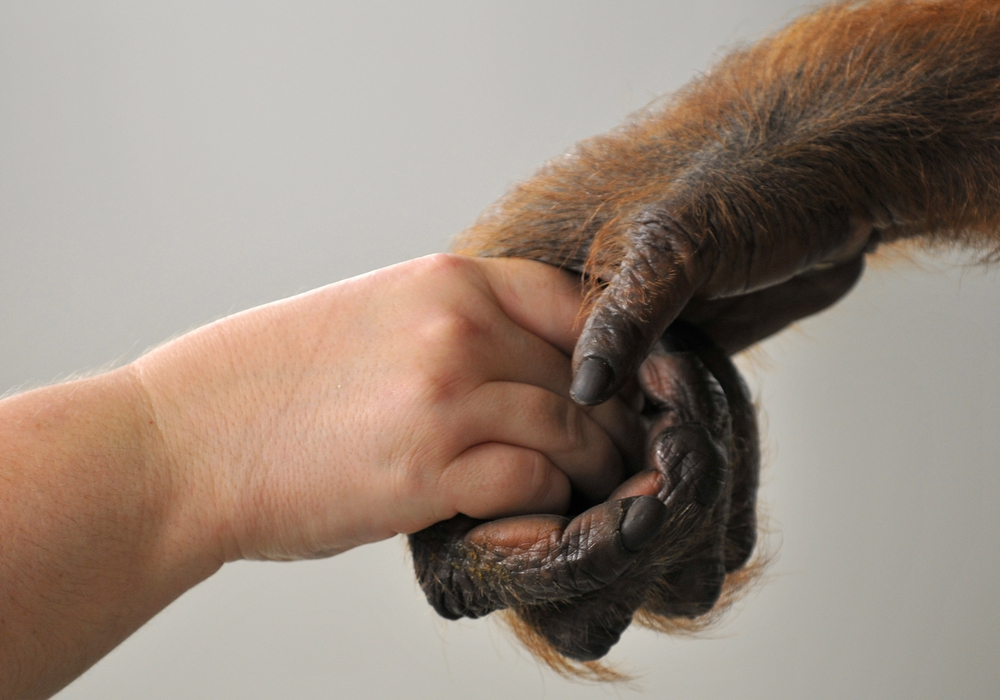 Unter anderem sollen Affen nicht mehr in Zirkussen innerhalb Salzgitters zu sehen sein. Symbolfoto: Jutta Hof