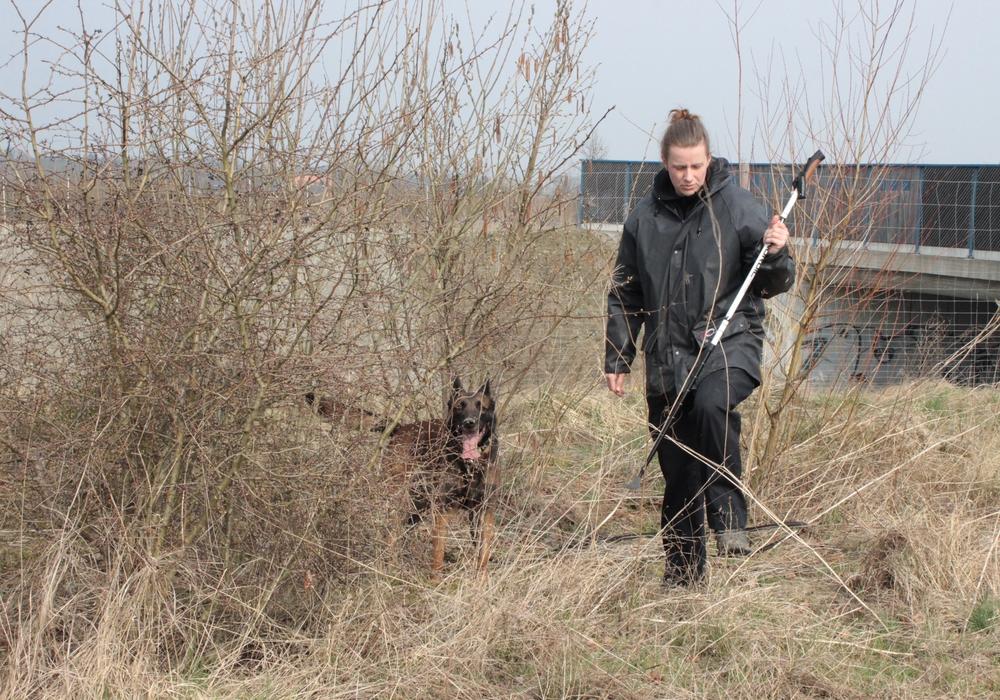 Auch Spürhunde kamen zum Einsatz. Symbolfoto: Anke Donner