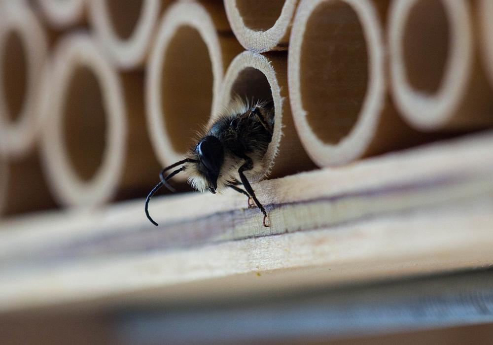 Mehr Schutz für Insekten: Das versucht die Stadt Helmstedt mit zahlreichen Maßnahmen zu garantieren. Symbolfoto: Pixabay