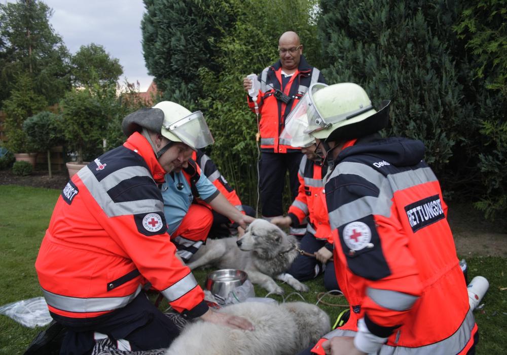Ungewöhnliche Patienten hatte der Rettungsdienst des Deutschen Roten Kreuzes am Montagabend zu versorgen. Zwei Vierbeiner waren auf die notfallmäßige Behandlung angewiesen. Foto: Werner Heise - Video: 24-7aktuell(BM)/Werner Heise