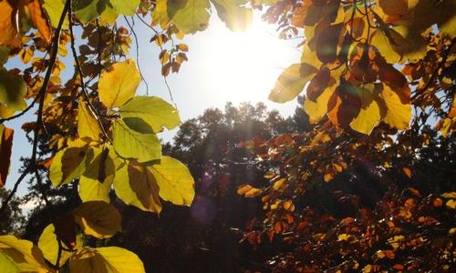 Nur einmal blinzeln reicht, um den goldenen Oktober zu verpassen. Denn der November lässt uns wissen, dass er vor der Tür steht.