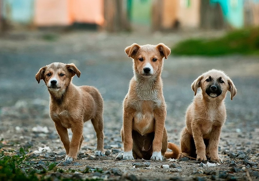 Für diese kleinen Hunde könnte eine Gefährdungslage vorliegen, würden sie einfach ausgesetzt werden. Symbolbild.