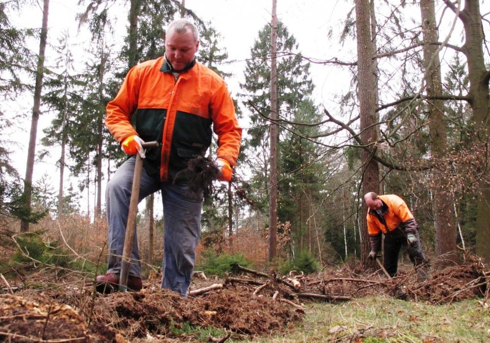 Der Wald wurde durch die vergangenen zwei Jahre schwer geschädigt: Dürre und Borkenkäfer fordern ihren Tribut. Foto: Niedersächsische Landesforsten