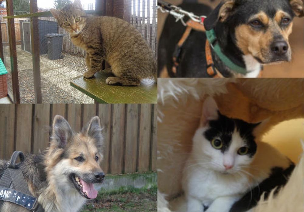 Von links oben nach rechts unten: Katze Kati, Hund Morey, Hund Stella und Katze Olivia suchen ein Zuhause. Fotos: Tierschutzverein Bad Harzburg