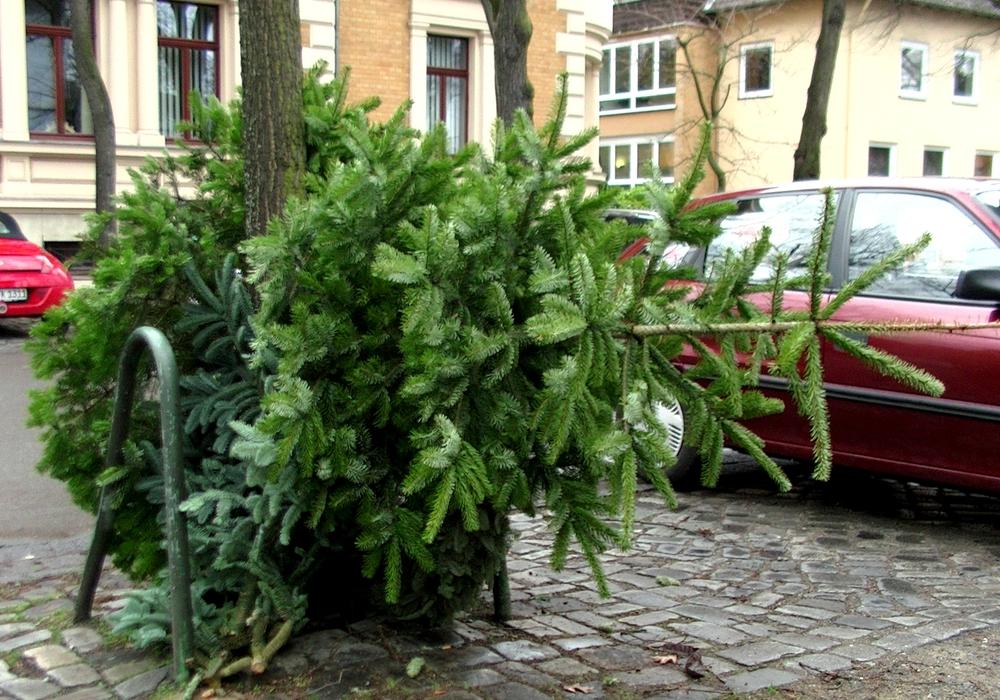 Nach Weihnachten müssen die Bäume wieder weg. Symbolfoto: André Ehlers