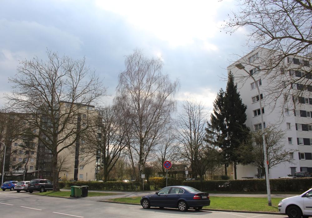 Mehrere Bäume an der Schulenburgallee sollen gefällt werden. Foto: Christoph Böttcher