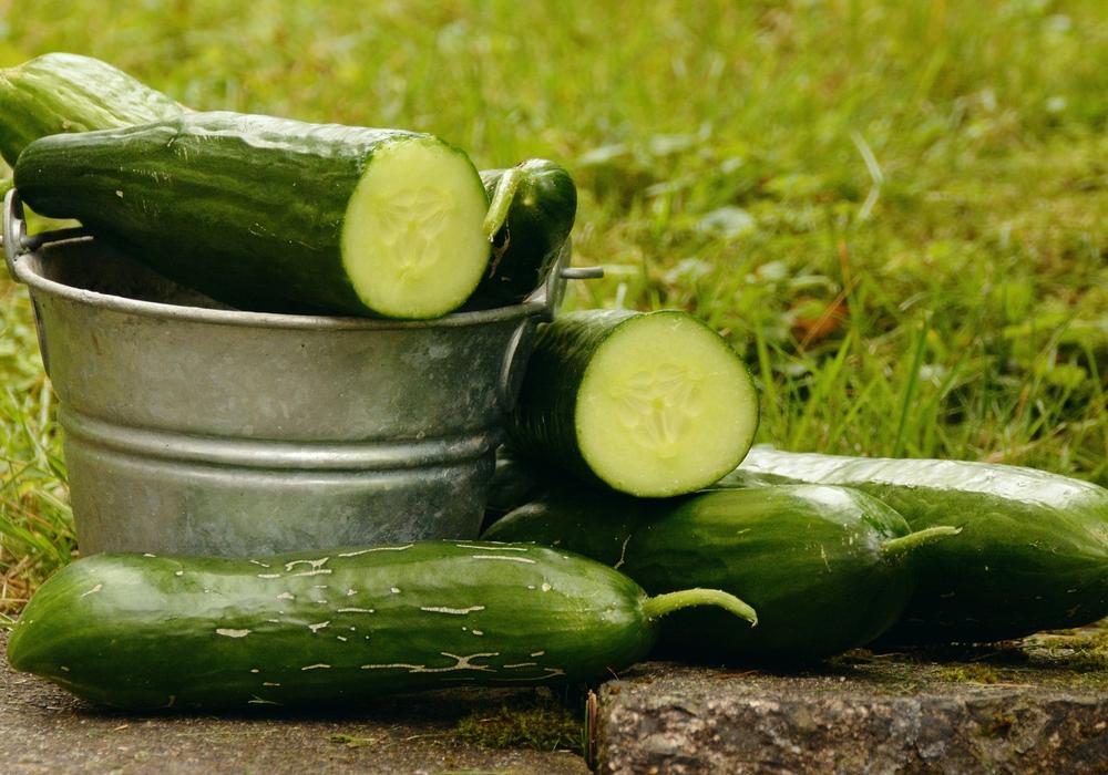 Ein Virus bedroht die Gurken, Zucchini und Kürbisernte nun auch in Mitteleuropa - Ernteausfälle von bis zu 50 Prozent sind die Folge. Symbolfoto. Pixabay