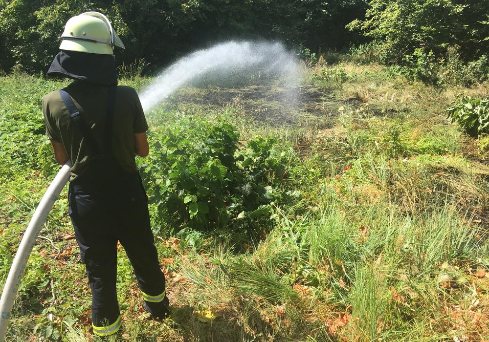 Die Feuerwehr hilft, die Grünanlagen mit Wasser zu versorgen. Symbolfoto: Archiv