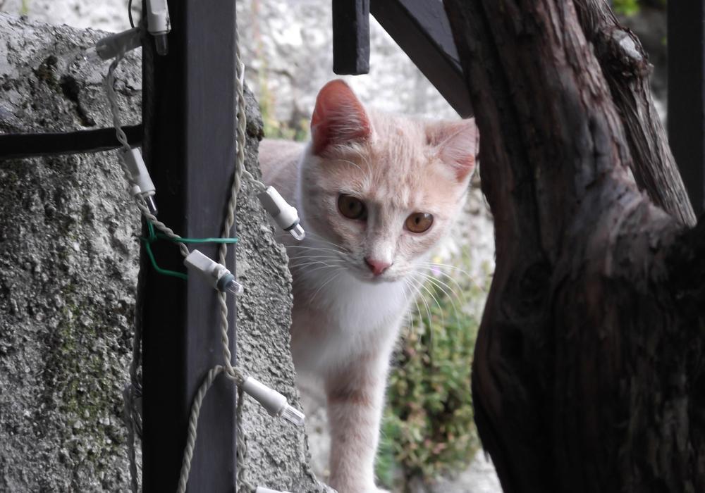 Junge Katze. Foto: Deutscher Tierschutzbund
