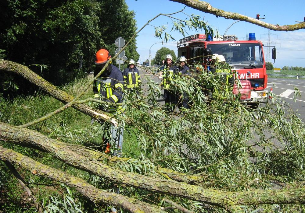 Der Baum war zum Teil auf die Straße gefallen und musste von der Feuerwehr entfernt werden. Fotos: Feuerwehr Flechtorf