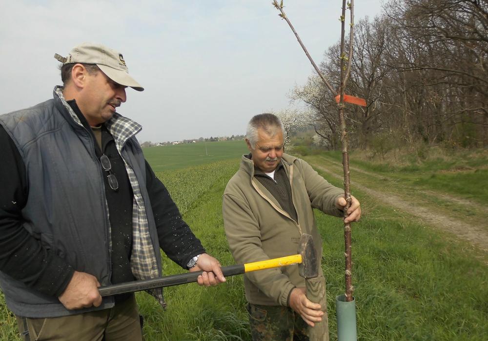 Holger Meier und Konrad Diettelbach bei der Baumpflege. Foto: Privat