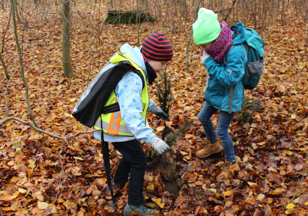 Kinder aus Braunschweig und Wolfenbüttel pflanzten im Lechlumer Holz 2.000 Bäume. Foto: Bernd Dukiewitz