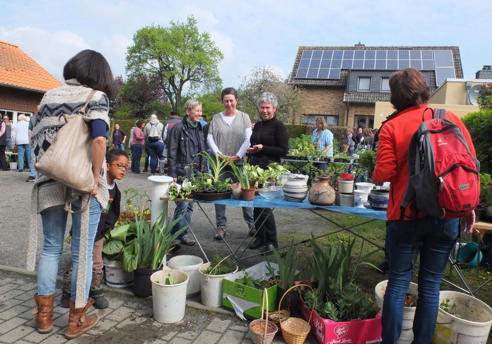 Wurde in diesem Jahr wieder gut angenommen: Die Pflanzenbörse in Gilzum beim Dorfgemeinschaftshaus. Foto: privat