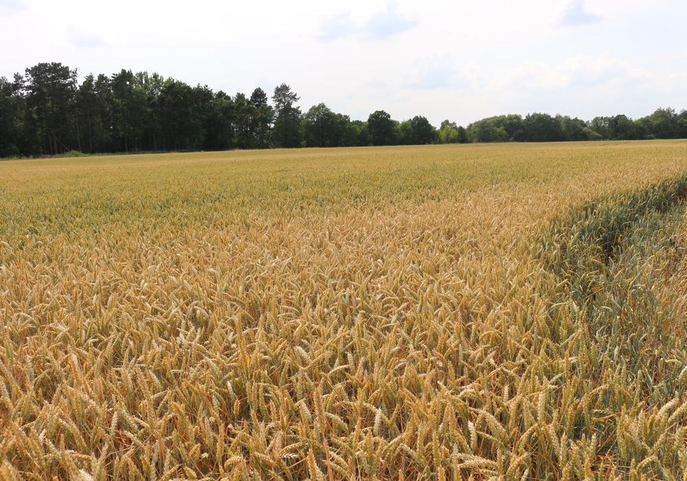 Die Landwirte zeigten sich nicht uninteressiert am Artenschutz. Symbolfoto: Anke Donner