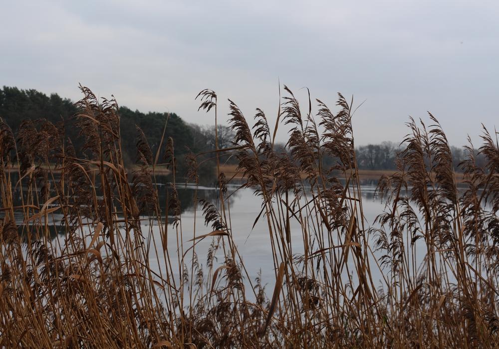 Die NABU informiert über Natur am Ellernbruchsee. Symbolfoto: Archiv