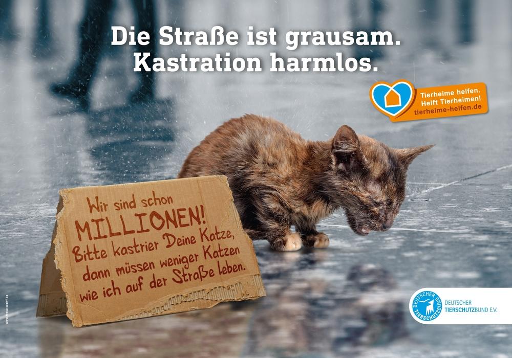 Der Deutsche Tierschutzbund macht mit seiner Kampagne auf das Leid der Straßenkatzen in Deutschland aufmerksam. Darstellung: Deutscher Tierschutzbund