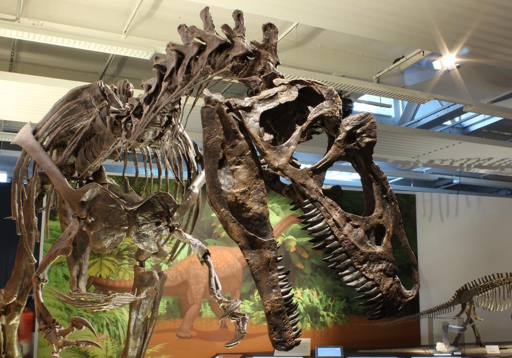 """Die Sonderausstellung """"Jurassic Harz. Dinosaurier von Oker bis Wyoming"""" wird im Naturhistorischen Museum in der Ausstellungshalle Hamburger Str. 267 noch bis zum 23. Juli 2017 zu sehen sein. Foto: A. Ritter, Staatliches Naturhistorisches Museum"""
