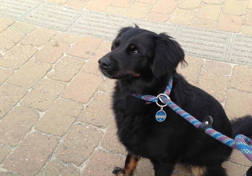 An der Marke sei schnell zu erkennen, ob der Besitzer Hundesteuer bezahle.