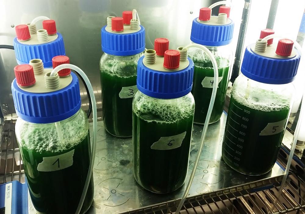 Bioreaktoren im Lichtbrutschrank. Foto: Ostfalia