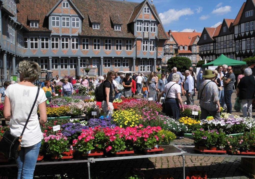 Auch in diesem Jahr fanden viele Gärtnerfreunde den Weg zum Geranienmarkt. Fotos: Andreas Meißler