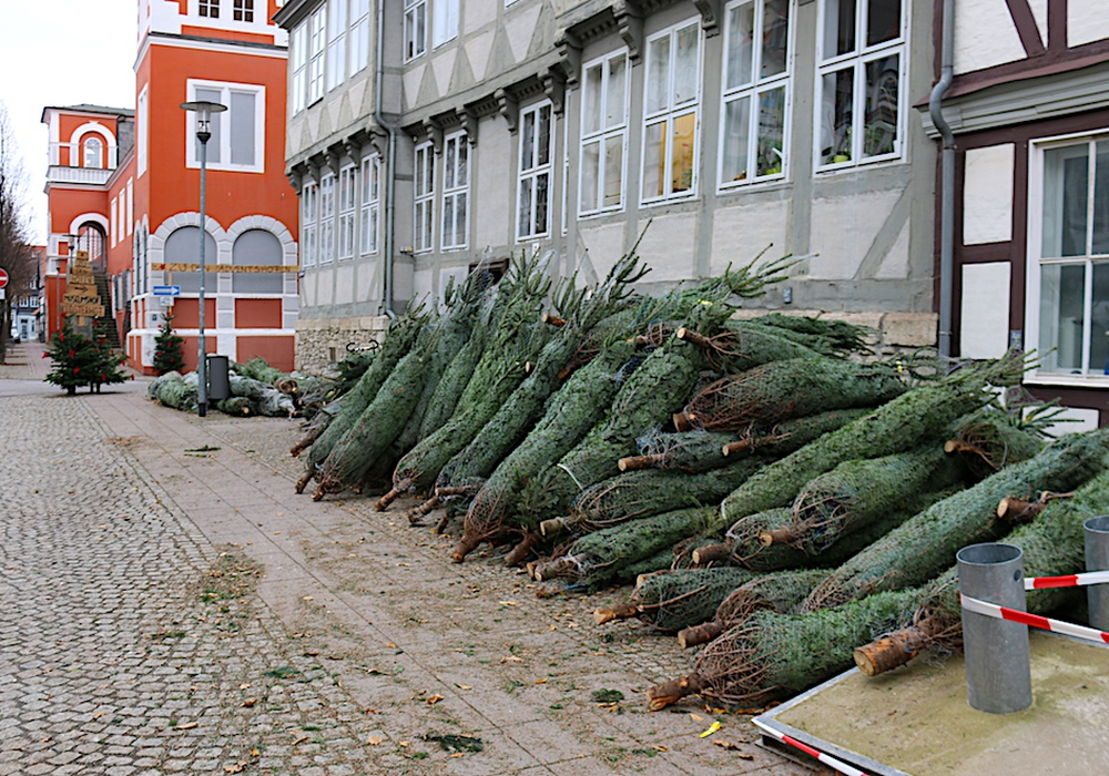 Das Weihnachtsbaumlager vor dem Büro des Veranstaltungsmanagement in der Kanzleistraße. Foto: Werner Heise