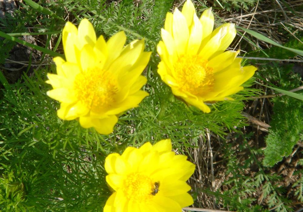 Am 8. und 22. April findet eine Wanderung in Heeseberg statt. Foto: Geopark