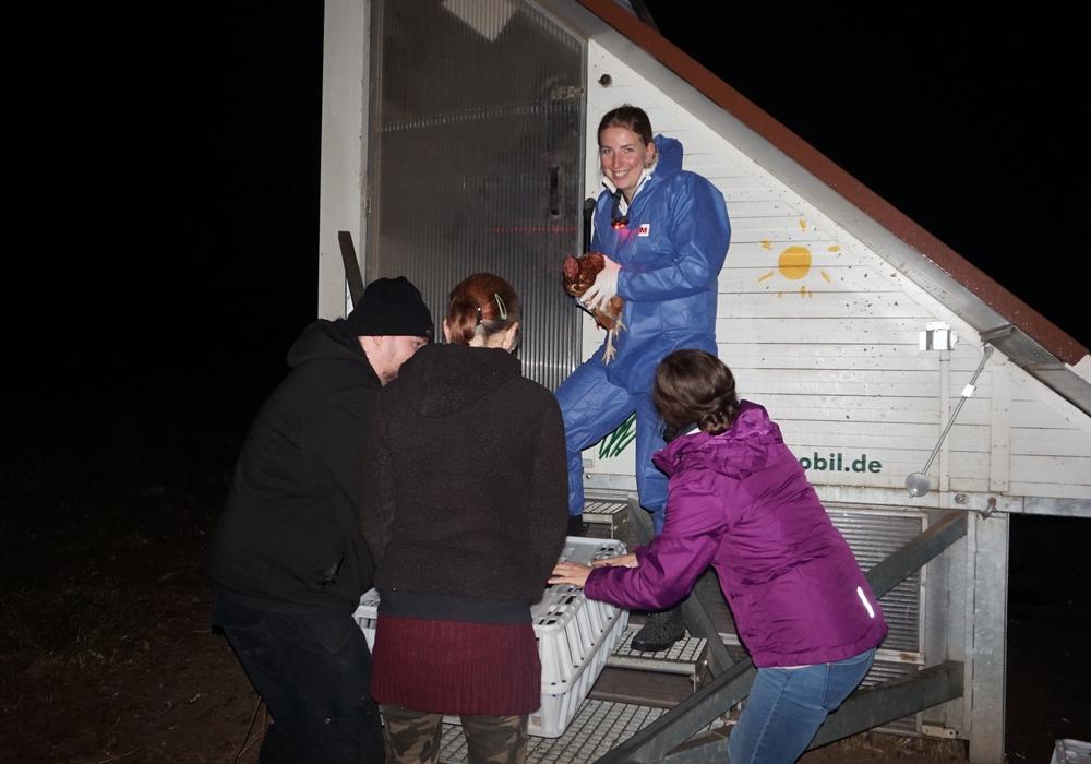 Am Wochenende wurden knapp 200 Hennen gerettet. Fotos: Verein Stark für Tiere
