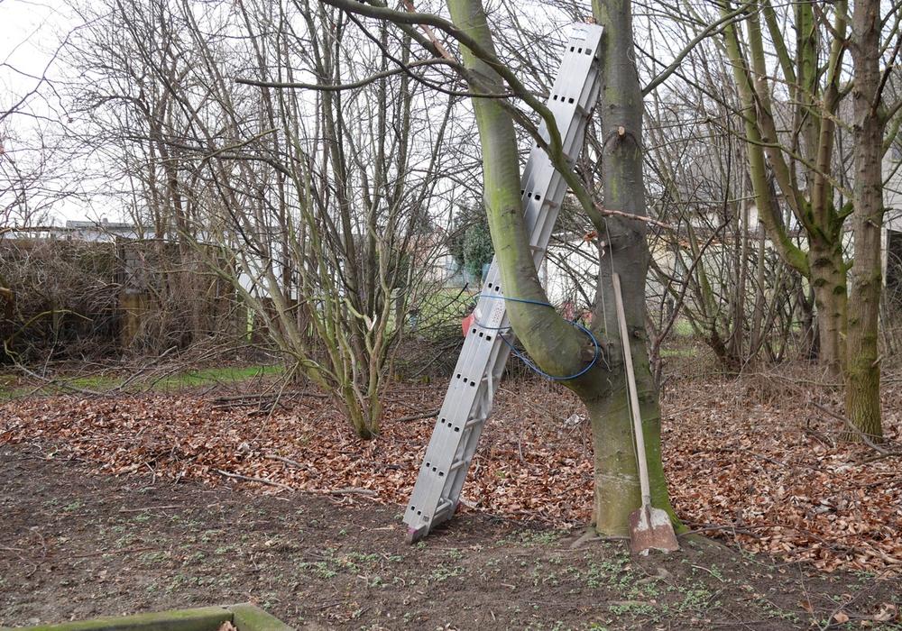 Am 9. April startet in Salzgitter die Umweltwoche. Symbolfoto: Alexander Panknin
