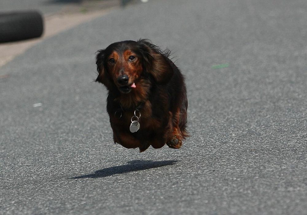 Hunderennen in Remlingen. Foto: