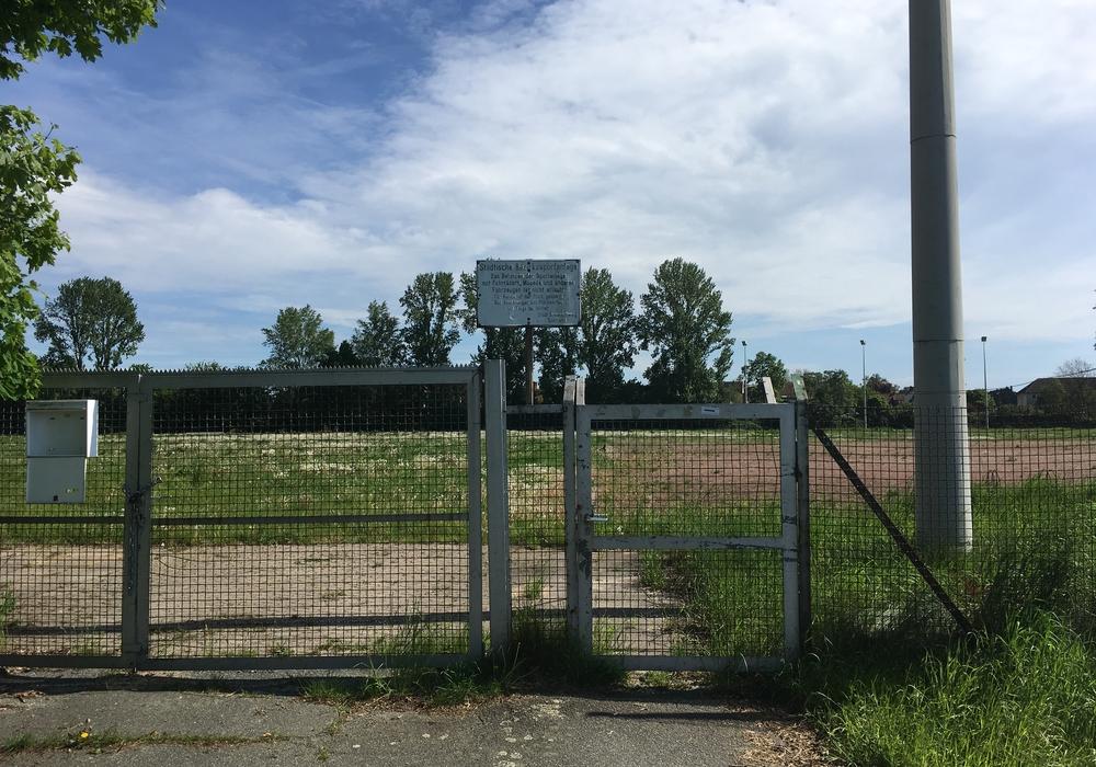 Die ehemalige Sportanlage Kälberwiese an der Feldstraße. Hier sollen neue Wohnungen entstehen. Foto: Alexander Dontscheff.