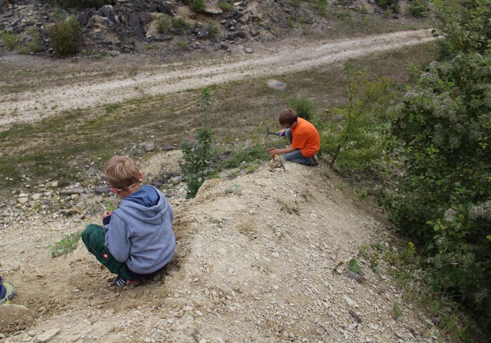 Am Samstag gibt es eine Fossiliensuche in Hondelage. Foto: Geopark/S. Dargatz