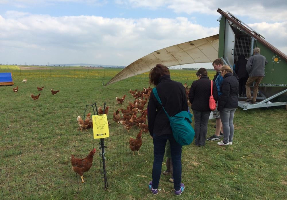Hühner müssen ab Samstag in den Stall. Symbolfoto: Werner Heise.