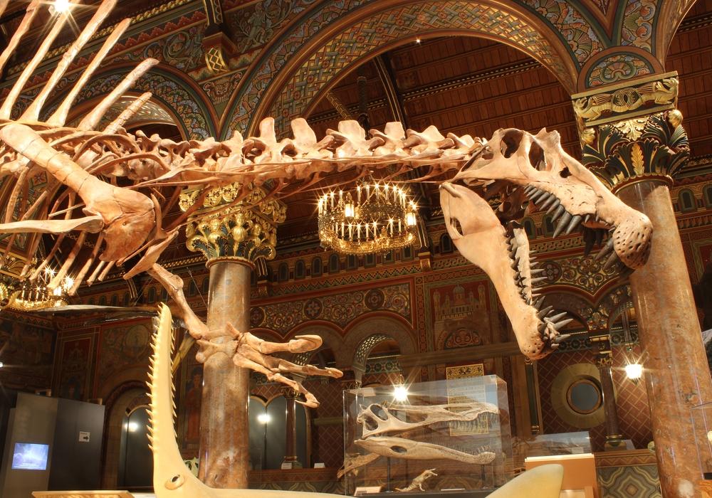 """Die Laufzeit der Sonderausstellung """"Spinosaurus – Der rätselhafte Riese"""" des Staatlichen Naturhistorischen Museums in der Burg Dankwarderode wird um acht Wochen verlängert. Foto: Achim Ritter"""
