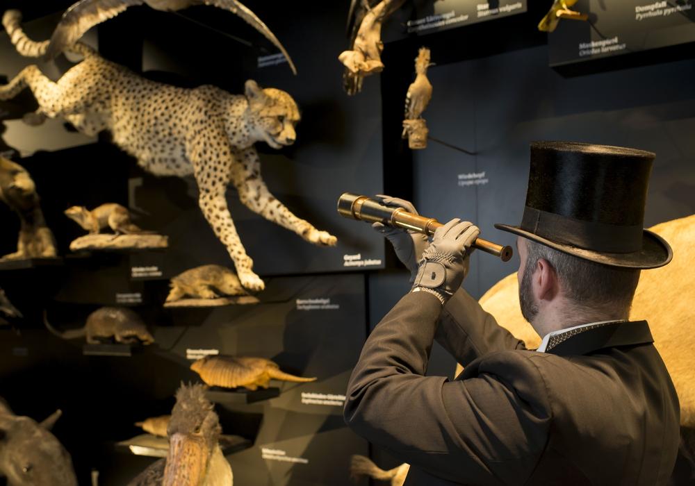 Ein Zeitgenosse Charles Darwins führt durch das Schaumagazin. Foto: Staatliches Naturhistorisches Museum