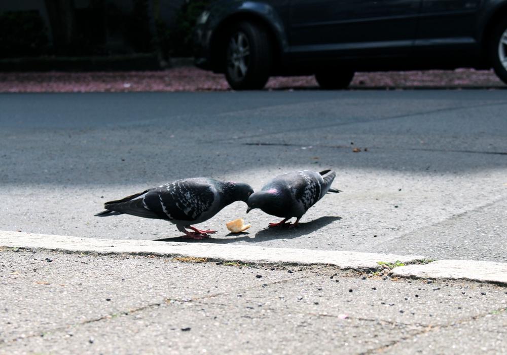 Die CDU will die Abfalleimer gegen Vögel sichern, Foto: Archiv