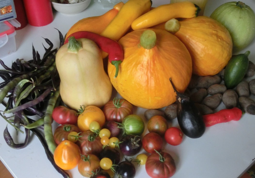 Selbstangebautes Gemüse (größtenteils alte Gemüsesorten). Foto: JUP