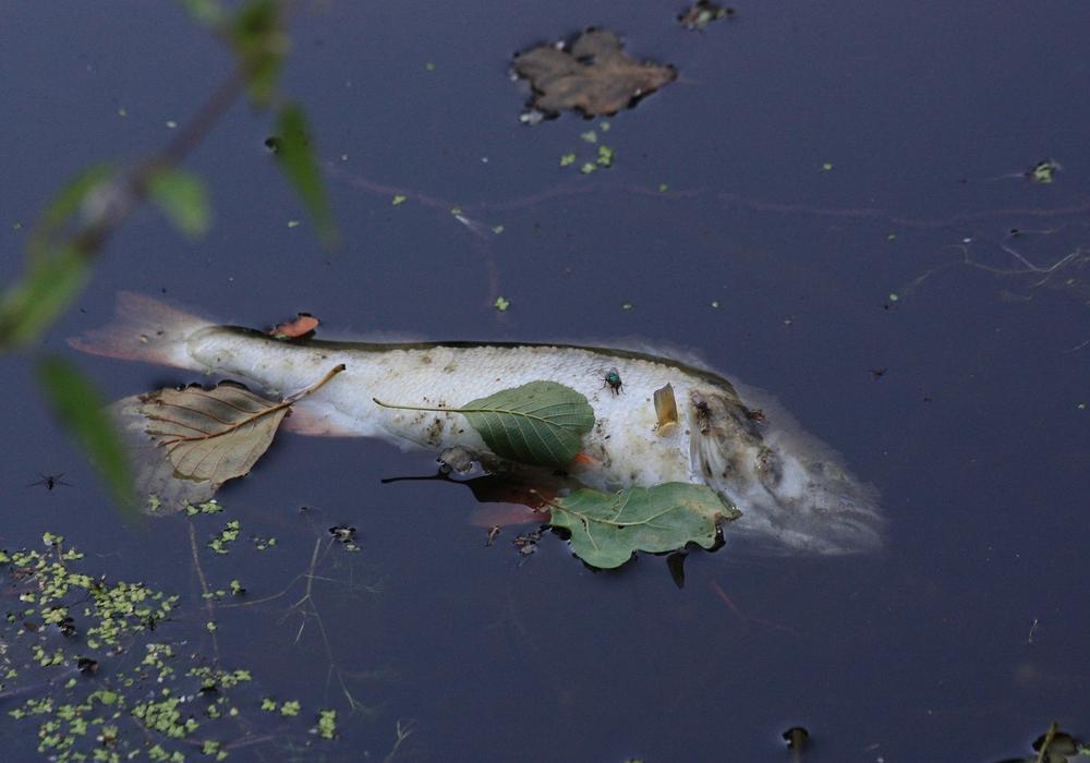 In der Warmen Bode wurden tote Fische gefunden. Symbolfoto: pixabay